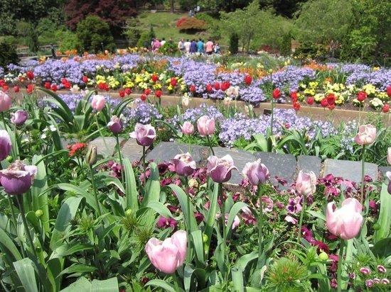 Sarah P. Duke Gardens : historic garden blooming