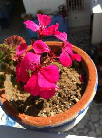 Bodrum Sade Pansiyon: çiçekler açmış :)