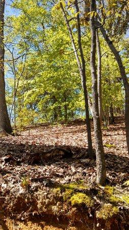 George Washington's Mount Vernon : Beautiful trees