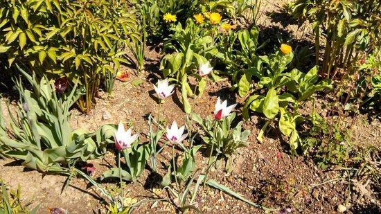 George Washington's Mount Vernon : Flowers