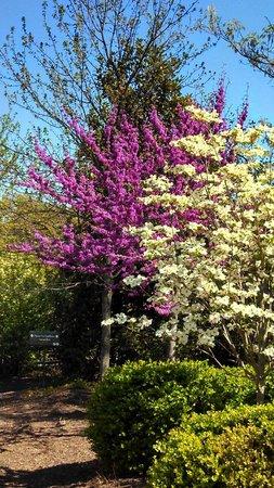George Washington's Mount Vernon : Beautiful flowering trees