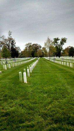 Arlington National Cemetery: Rows of headstones