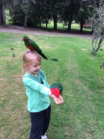 Queen Mary Falls Caravan Park & Cabins : The kids loved the parrots!