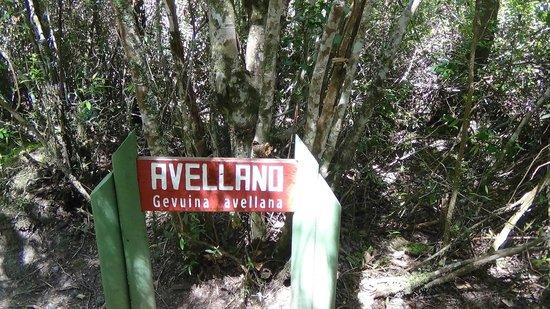 Saltos del Petrohue: vegetacion