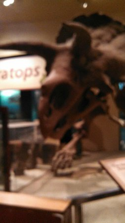 National Museum of Natural History : Close-up