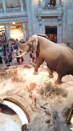 National Museum of Natural History : Welcoming committee