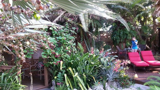 Atlantis House : Beautiful palm shaded garden makes perfect spot for breakfast