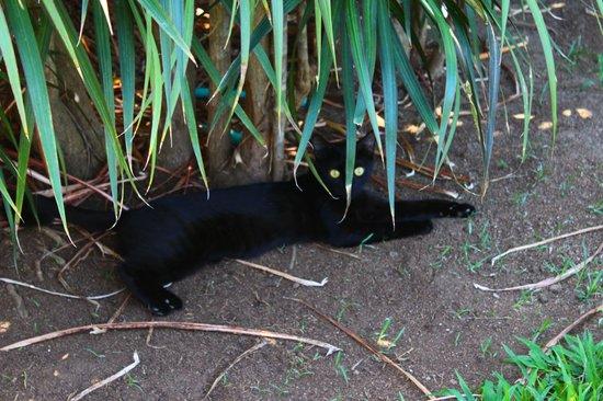 Hotel Riu Guanacaste: Kitty Cat