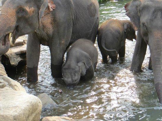 Patara Elephant Farm - Private Tours : Love them