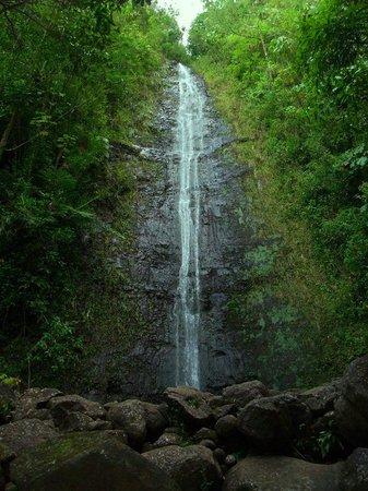 Manoa Falls: 熱帯雨林の中の散歩は気持ちいい!