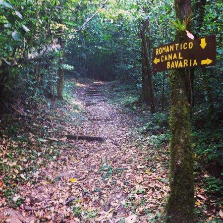 Selva Negra Mountain Resort: Inicio de los senderos