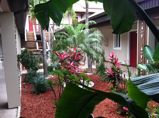 Palm Crest Resort Motel : Courtyard-1