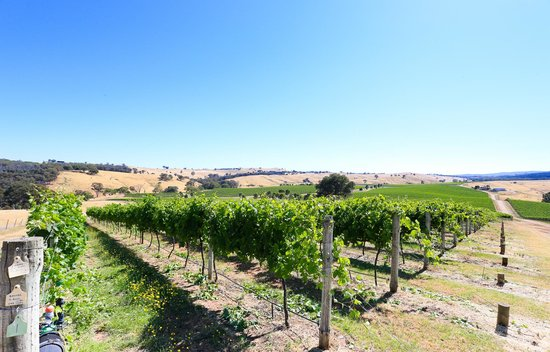 Indigo Vineyard