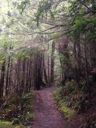 Cape Lookout Bed n Breakfast : Hiking trail to Cape Falcon