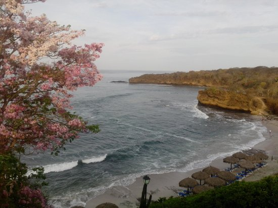 Grand Palladium Vallarta Resort & Spa: Hermoso vista desde tu habitación.