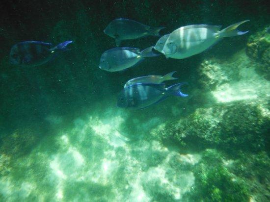 Yal-ku Lagoon : Variedad de peces