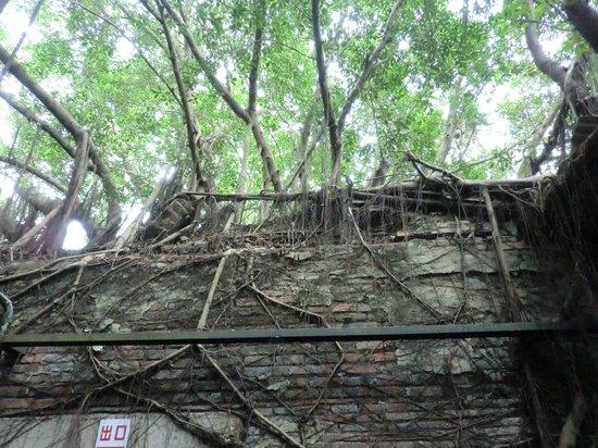 Maison arboricole d'Anping : 安平樹屋