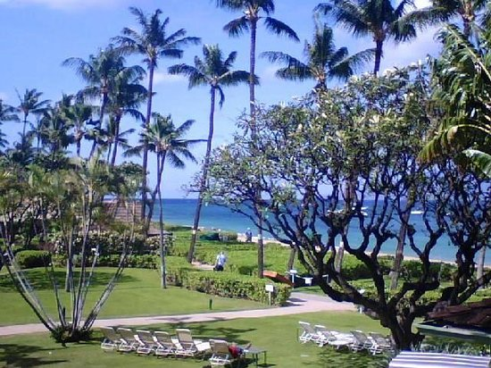 Kaanapali Beach Hotel : 2nd floor view from our lanai of beach and plumeria trees mmmm- the scent!