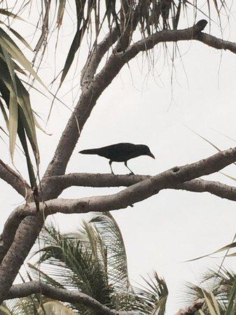 The Sun Siyam Iru Fushi Maldives: Обычная ворона