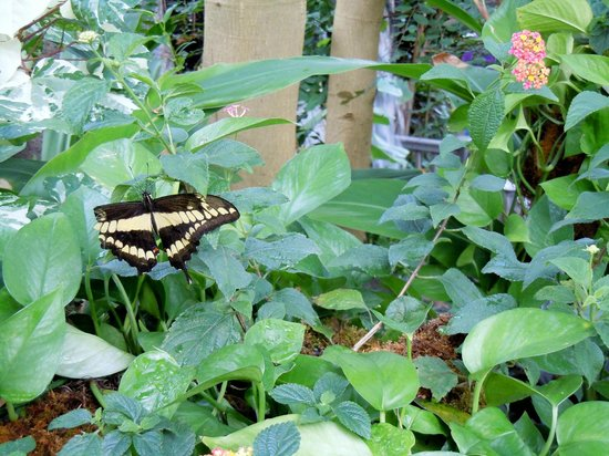 """Franklin Park Conservatory and Botanical Gardens: """"Blooms and Butterflies"""""""