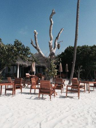 The Sun Siyam Iru Fushi Maldives : Ресторан