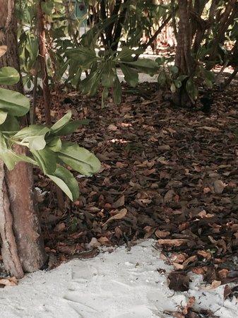 The Sun Siyam Iru Fushi Maldives : качество уборки территории