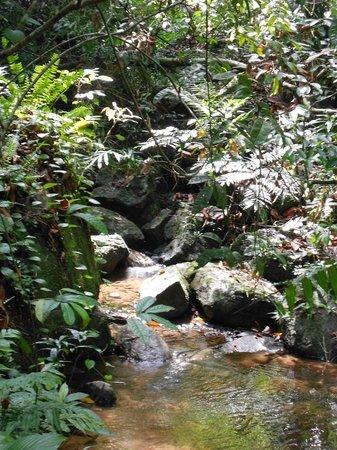 Sinharaja Rest: Singharaja Forest