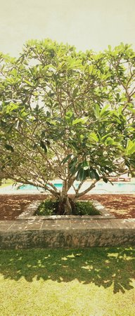 Taru Villas - Rock Villa : Pool area