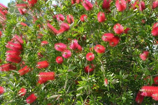 Blütenpracht  an Oster_Casa Naya