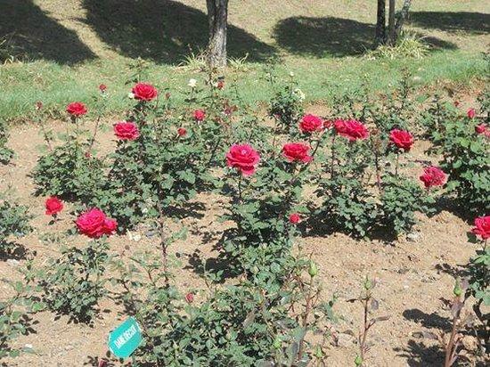 Rose Garden - 2