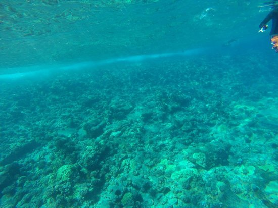 Pacific Whale Foundation: Molokini corals just off the boat. 3/19/14