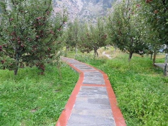 Banjara Camp &  Retreat - Sangla Valley Camp : Gardens