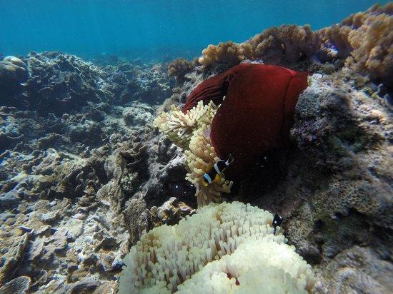 Domaine de la Paix: Un aquarium du lagon vers Port Sud Est