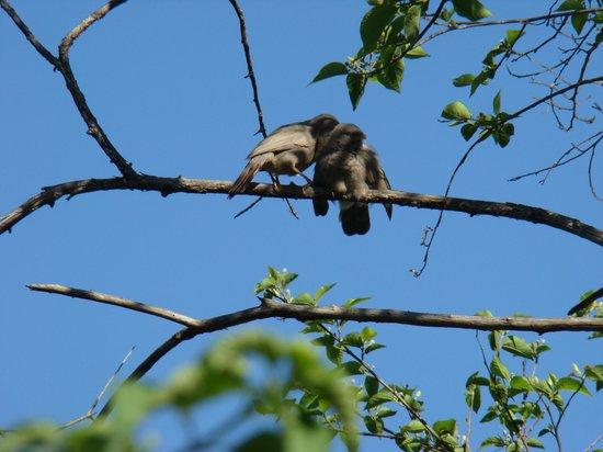 Wild Brook Retreat: Bird Watching
