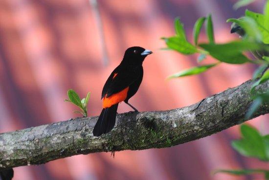 La Pina Lodge B&B: Variety of birds in La Piña