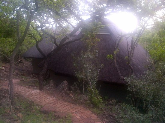 andBeyond Phinda Mountain Lodge: Thatched roof