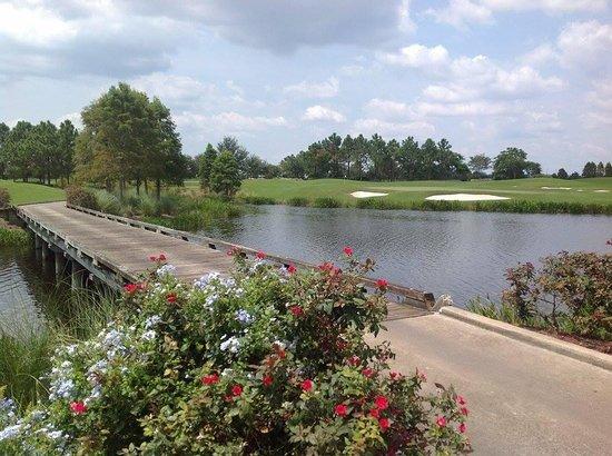 Rosen Shingle Creek : Gold course