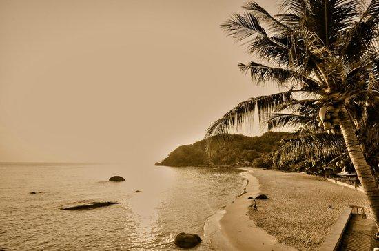 Silver Beach : the beach
