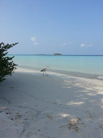 Komandoo Maldives Island Resort : Our view from the sunbeds outside our villa