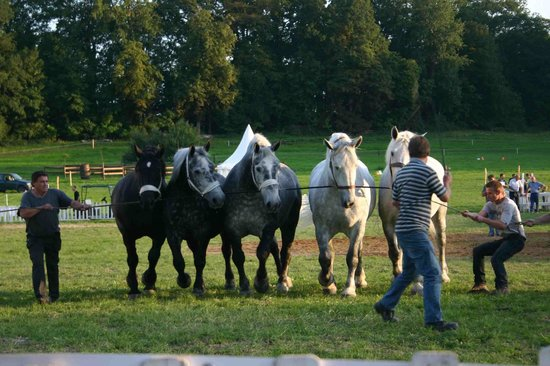 Villa Fol Avril : Chevaux Percheron / Percheron horses