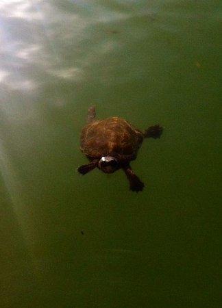 Pullman Marrakech Palmeraie Resort and Spa : Il y a autour un lac avec des tortues et des grosses carpes!