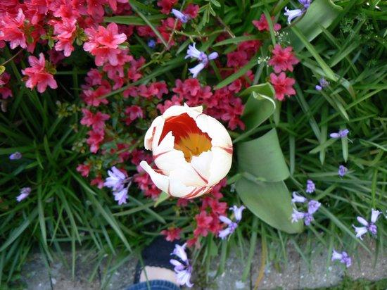 Springfield Country Hotel: Beautifully kept garden