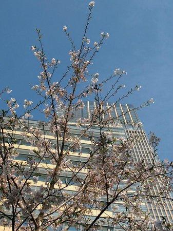 Tokyo Midtown: ...