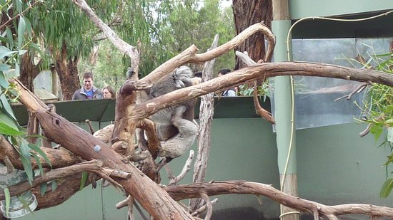 Phillip Island Nature Parks - Penguin Parade: Moonlit Wildlife Sanctuary