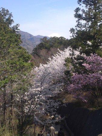 Oboshi Park: うっすらと富士山が見えます