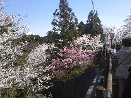 Oboshi Park: こちらも富士山が見えます
