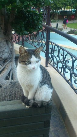 Renaissance Antalya Beach Resort & Spa: Cats are everywhere!