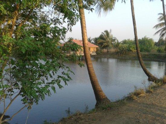 Saguna Baug: cottage & surrounding