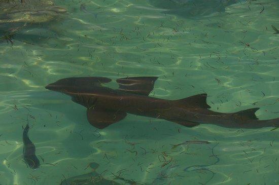 Dolphin Explorer: акула
