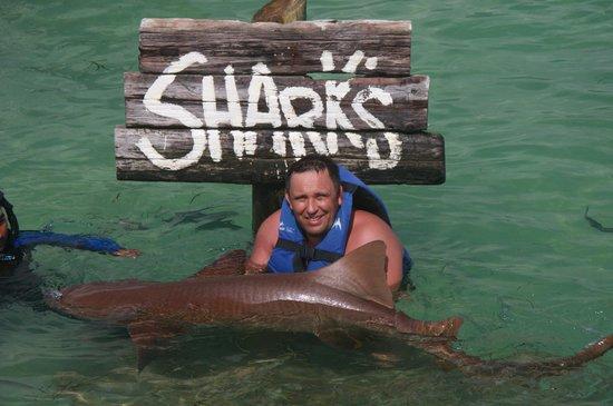 Dolphin Explorer: акула-1